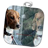 3dRose Russell Foote Photography-Dogs - Beagle looking out the window for his human - 8x8 Potholder (phl_281492_1)