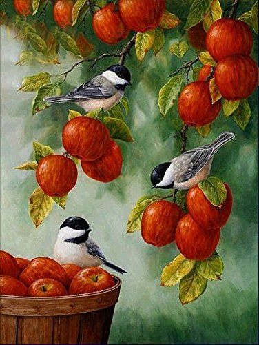 Taloyer DIY 5D Diamond Rhinestone Bird Fruit Painting Cross Stitch Kit Mosaic Home Decor Crafts