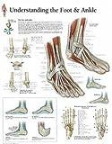 Medical Basics Science Education Charts & Posters