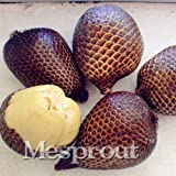 M-Tech Gardens Rare Snakefruit Salak Seeds for Growing (5 Seeds Pack)