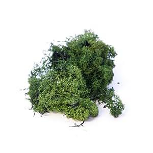 Smithers Oasis - Bolsa de 500g de Musgo Verde Oscuro Finlandés