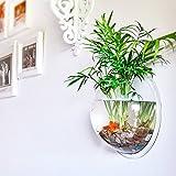 Half Fish Bowl Vase Wall Hanging Fish Bowl Vase Glass Flower Planter Home Decor Ball Terrarium Container