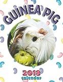 Guinea Pig 2018 Calendar (UK Edition)