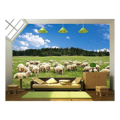a Lot Sheep on The Beautiful Green Meadow, Top Quality Design, Grand Print