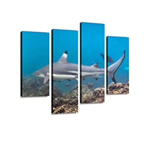 Black Tip Reef Shark (Carcharhinus melanopterus) Swimming Close up Canvas Wall Art Hanging Paintings Modern Artwork Abstract Picture Prints Home Decoration Gift Unique Designed Framed 4 Panel
