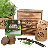 small indoor garden ideas Indoor Herb Garden Starter Kit - Organic, Non GMO Herb Seeds - Basil Thyme Parsley Cilantro Seed, Potting Soil, Pots, Scissors - DIY Grow Kits for Growing Herbs Indoors, Kitchen, Balcony, Window Sill