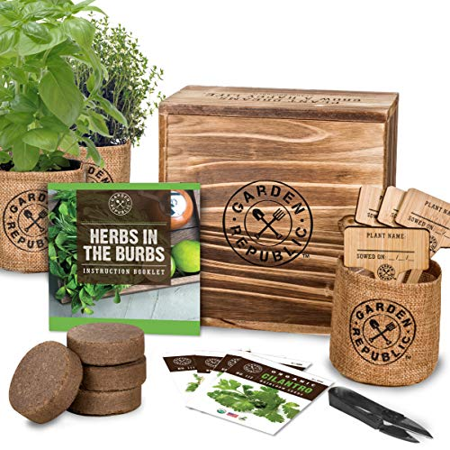 Indoor Herb Garden Starter Kit - Organic, Non GMO Herb Seeds - Basil Thyme Parsley Cilantro Seed, Potting Soil, Pots, Scissors - DIY Grow Kits for Growing Herbs Indoors, Kitchen, Balcony, Window Sill (Fresh Herb Container Garden)