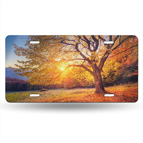 CARPLATE98 Big Majestic Autumn Tree Customized Personalized License Plate 6