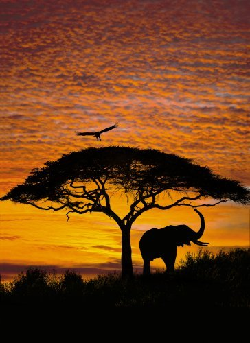 brewster-for-national-geographic-4-501-african-sunset-4-panel-mural-with-paste-6-foot-4-inch-by-8-fo