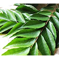 Fresh Curry Leaves 20g