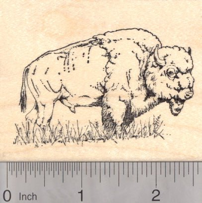 American Bison Rubber Stamp, Buffalo