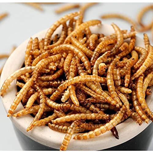 JARDTEC Non-GMO Dried Mealworms - 100% Natural Treats for Birds Chickens Hedgehog Hamster Fish Reptile Turtles, 11 lb