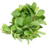 David's Garden Seeds Herb Mint Common SL71235 (Green) 500 Non-GMO, Open Pollinated Seeds
