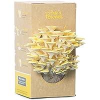 Kit Prêt à Pousser pour cultiver des champignons - Pleurotes jaunes - Dans votre cuisine en 10 jours