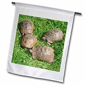 Taiche - Photography - Tortoises - Testudo Iberia - animals, ibera greek tortoise, land turtles, reptiles, testudo ibera, tortoise - 12 x 18 inch Garden Flag (fl_46677_1)