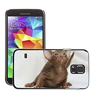 Super Stella Slim PC Hard Case Cover Skin Armor Shell Protection // M00144978 Cat Curious Kitten Cat Baby // Samsung Galaxy S5 S V SV i9600 (Not Fits S5 ACTIVE)