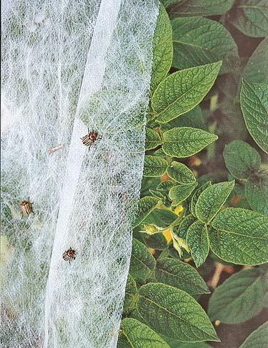 Summerweight Garden Fabric Garden Row Cover, 6 Feet x 20 Feet