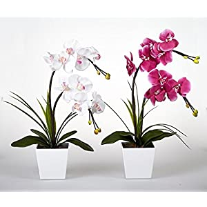 FANStek 2AA LED Lighted Artificial Orchid Arrangement-Battery Operated Orchid Pot with 9 Lights 2