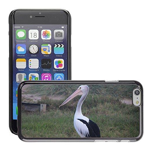 """Bild Hart Handy Schwarz Schutz Case Cover Schale Etui // M00134711 Pelican Bird Australien Tiere // Apple iPhone 6 PLUS 5.5"""""""