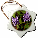 3dRose TDSwhite – Summer Seasonal Nature Photos - Floral Twin Blue Brodea Flowers - 3 inch Snowflake Porcelain Ornament (orn_284513_1)