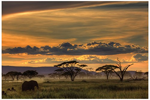 JP London Solvent Free Print PAPXL1X42438 Africa African Animals Safari Plains Dusk Ready to Frame Poster Wall Art 60