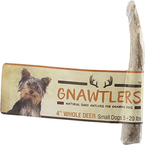 Pet Parents Gnawtlers - Premium Deer Antlers for Dogs, Naturally Shed Deer Antlers, All Natural Deer Antler Dog Chew, Specially Selected from The Heartland Regions - 4