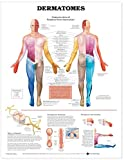 #7: Dermatomes Anatomical Chart