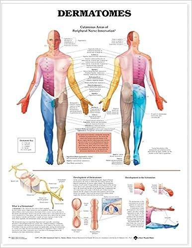 Dermatomes Anatomical Chart Anatomical Chart Company 9781587791116