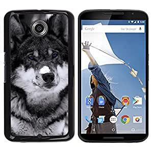 All Phone Most Case / Oferta Especial Duro Teléfono Inteligente PC Cáscara Funda Cubierta de proteccion Caso / Hard Case NEXUS 6 / X / Moto X Pro // Cute Blue Eyed Wolf