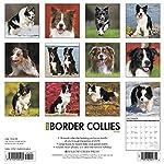 Just Border Collies 2020 Wall Calendar (Dog Breed Calendar) 3