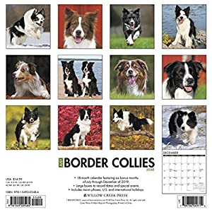 Just Border Collies 2020 Wall Calendar (Dog Breed Calendar) 34