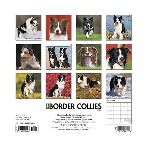 Just Border Collies 2020 Wall Calendar (Dog Breed Calendar) 1