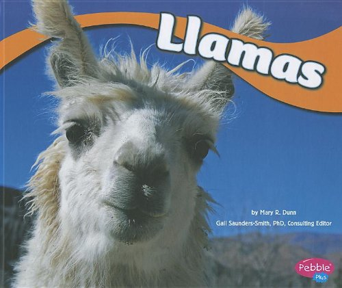 Llamas (South American Animals)