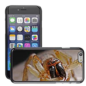 Super Stella Slim PC Hard Case Cover Skin Armor Shell Protection // M00145495 Spider Arachnid Macro Insect Nature // Apple iPhone 6 4.7""