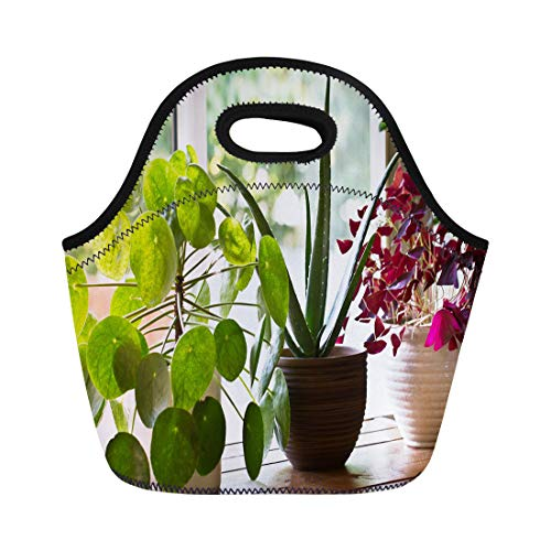 Semtomn Lunch Bags White Air House Plant Display Window Indoor Houseplants Green Neoprene Lunch Bag Lunchbox Tote Bag Portable Picnic Bag Cooler Bag