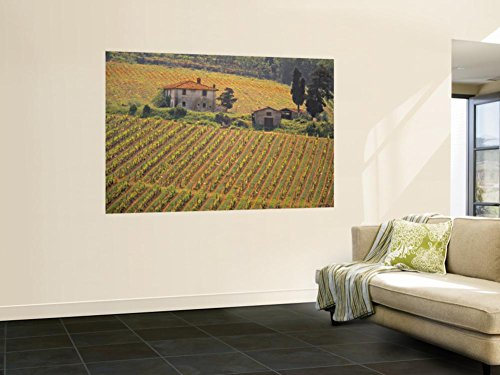 Chianti Greve In Tuscany (Vineyard, Greve in Chianti, Tuscany, Italy Wall Mural by Walter Bibikow 48 x 72in)