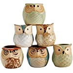Sun-E 2.5 Inch Owl Pot Ceramic Flowing Glaze Base Serial Set Succulent Plant Pot Cactus Plant Pot Flower Pot Container Planter Bonsai Pots with A Hole Perfect Gift Idea 6 in Set 8 New SUN-E collections!OWL OWL OWL!!!Ideal for adding a dash of refreshingly modern design to your home,Great Gift - this ceramic pot can serve a variety of purposes. Perfect gift for family and friends who love succulent plants with a green thumb or keep it in your own home for a touch of clean, modern style in your living space. Material:Ceramic(Made of top-quality clay and baked in high temperatures);Package content:6pcs*Pot. Approximate Size: 2.2 x 2.2 x 2.4 inch (L x W x H).