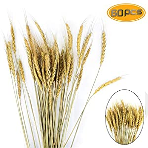 BeautyMood 60PCS Golden Dried Natural Wheat Sheave Bundle, Wheat Bundle Dry Grass Bouquet Premium Fall Arrangements DIY Home Kitchen Table Wedding Flower Bouquet Centerpieces Decorative 27