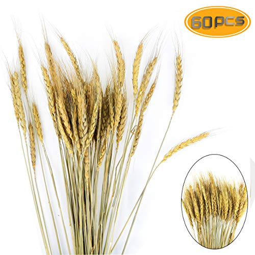 BeautyMood 60PCS Golden Dried Natural Wheat Sheave Bundle, Wheat Bundle Dry Grass Bouquet Premium Fall Arrangements DIY Home Kitchen Table Wedding Flower Bouquet Centerpieces Decorative