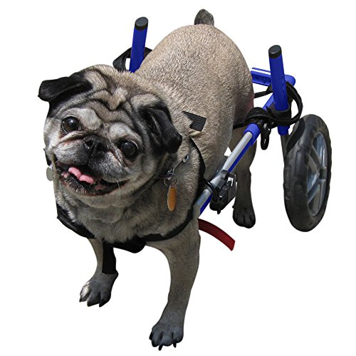 Dog Wheelchair - For Small Dogs 11-25 lbs - Veterinarian Approved - Wheelchair for Back Legs - By Walkin' Wheels
