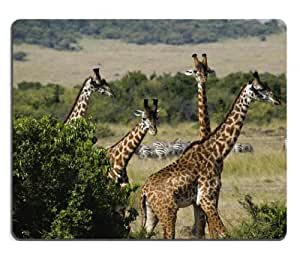 giraffe trio african rainforest animals Mouse Pads Customized Made to Order Support Ready 9 7/8 Inch (250mm) X 7 7/8 Inch (200mm) X 1/16 Inch (2mm) High Quality Eco Friendly Cloth with Neoprene Rubber Liil Mouse Pad Desktop Mousepad Laptop Mousepads Comfortable Computer Mouse Mat Cute Gaming Mouse pad