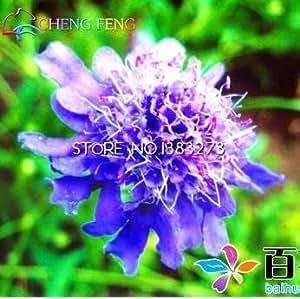 10 semillas de flor azul de la fiesta de boda hermoso color Flores Plantas Plantas fuertes y de semillas de flores ornamentales exóticas Bonsai Inicio Semillas