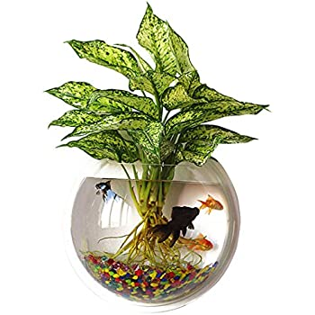 Amazon Sweetsea Hanging Wall Mounted Fish Bowl Aquaponic Tank