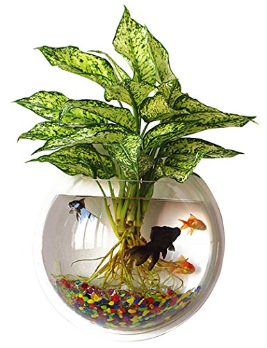 (Outgeek Wall Fish Bubble Wall Hanging Bowl Clear Acrylic Vase Flower Plant Pot Aquarium 9in)