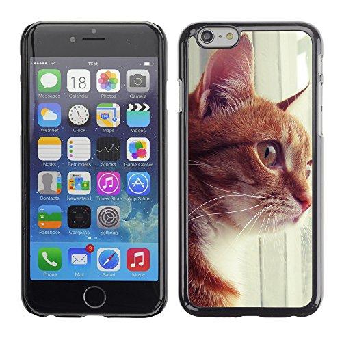 """Premio Sottile Slim Cassa Custodia Case Cover Shell // V00003182 chat curieux 3 // Apple iPhone 6 6S 6G PLUS 5.5"""""""