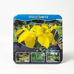 Paquete de agua Planta