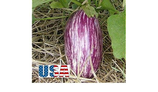 PLAT FIRM SEMILLAS DE GERMINACION: 40 semillas: USA VENDEDOR ...