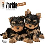 Yorkshire Terrier Puppies 2018 7 x 7 Inch Monthly Mini Wall Calendar, Animals Small Dog Breeds Terrier Puppies
