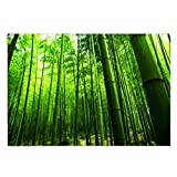 Fantasy Star Aquarium Background Lush Bamboo Forest Easy to Apply and Remove Fish Tank Wallpaper Sticker Background Decoration 24'' x 16''