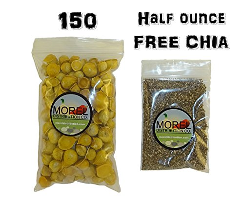 Japanese Garlic – Ajo Japones (100% Natural) 150 Per Bag and Half Ounce Chia FREE For Sale